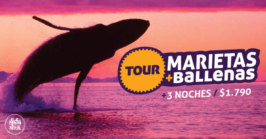 tour-ballenas-hsp