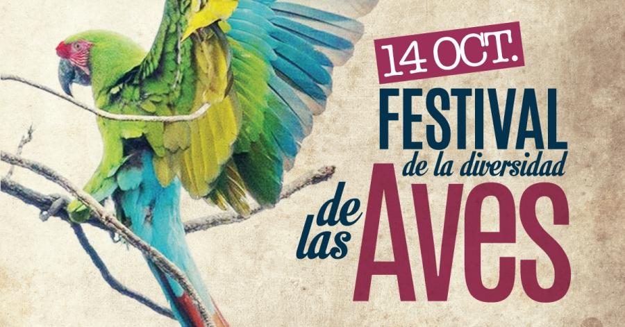festival-aves-hostal-san-pancho-nayarit