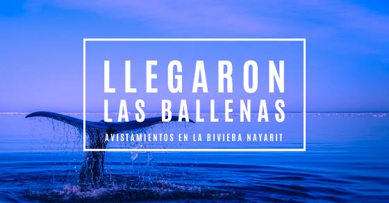 ballenas-hostal-san-pancho-nayarit